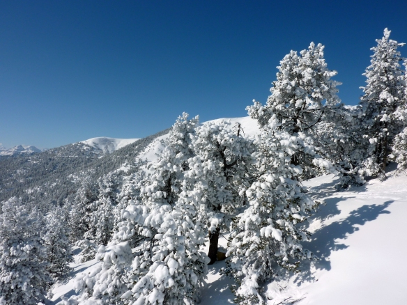 Winter snow on trees around Sauze d'Oulx and Sestriere Photo Henrik Elstrup