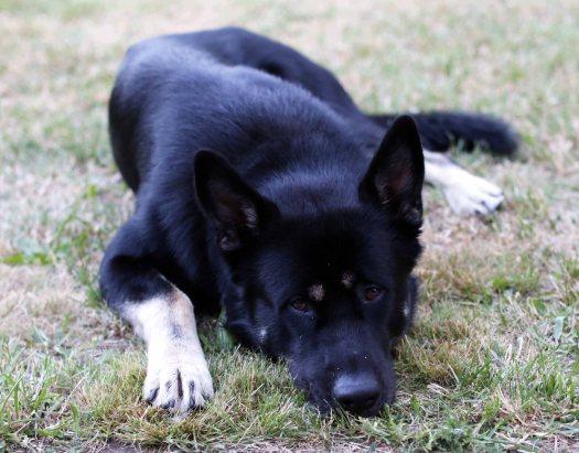Rex (2)