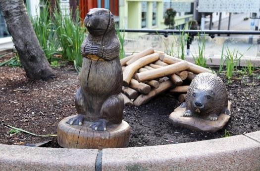Stavanger beavers