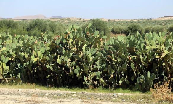 Tunesien kaktusfrugter Marina Aagaard fitness blog
