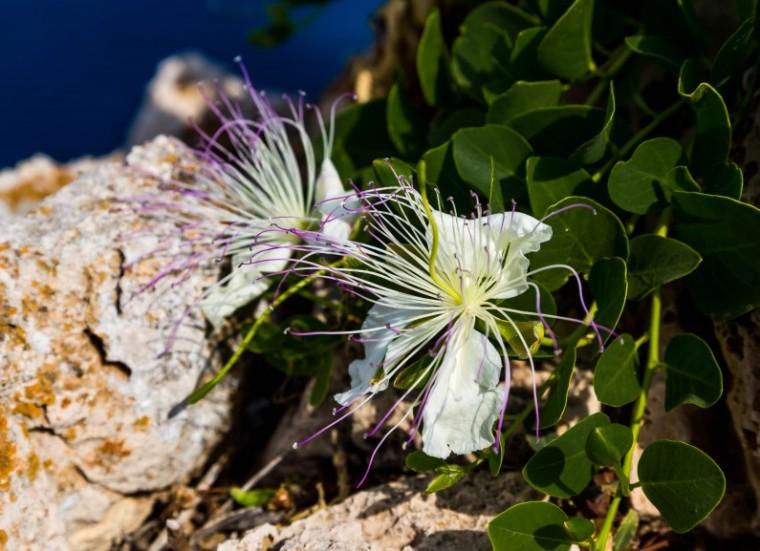 Menorca_Ferry_Marina_Aagaard_fitness_blog