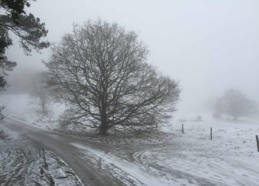 Walk_fog_Mols_wIMG_1776