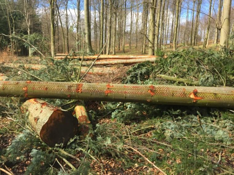 Kaloe_Forrest_Lumber_IMG_2362