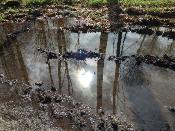 Kaloe_Forrest_Puddle_Reflection_IMG_2359