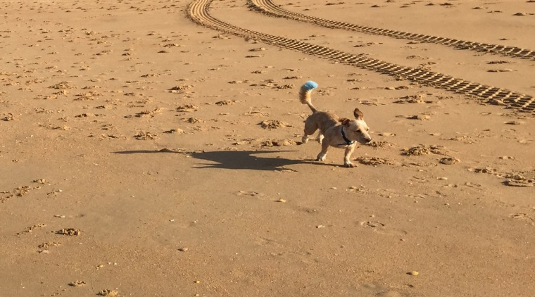 Algarve_Dog_Blue_Tail_IMG_3236