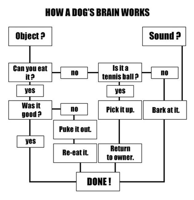 dogs_brain_flowchart