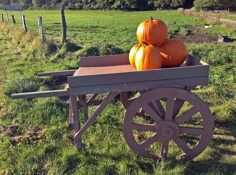Pumpkin_IMG_2270[1]